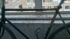 Dviratis balkone, palengė irgi prašosi atnaujinimo